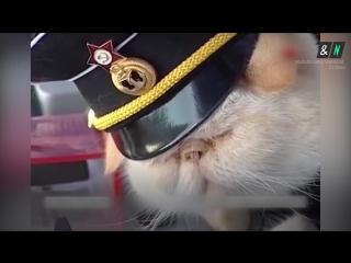 Кот-матрос девять лет служит на теплоходе