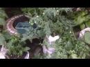 Овощи (огурцы, томаты, перец, баклажаны, кукуруза, арбузы, дыни и прочие) в мешках. ...