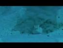 Рыбка жгет резину
