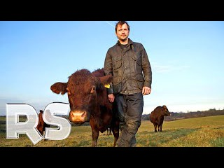 The Private Life Of Cows - Real Stories