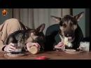 Video divertenti - Cani che mangiano a tavola - 2016 (Funny Compilation)