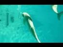 Просто дельфин пускает кольца
