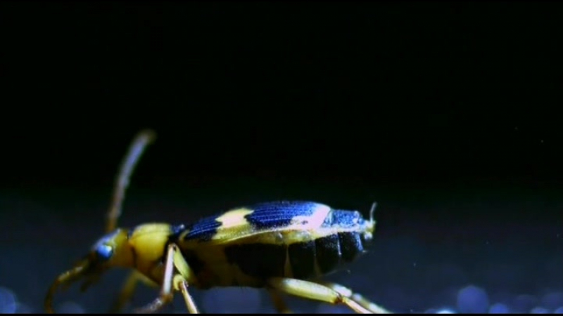 Яд. Достижение эволюции Poison an Evolutionary Mystery 3 из 3 2015 02. Яд и баланс экосистемы