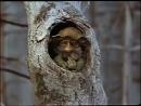 Ошибка дядюшки Ау 1979 Кукольный мультфильм ¦ Золотая коллекция