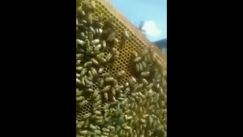 Відеоінструкція бджоляра