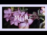 M()RE -- Desert Rose (cover Sting)
