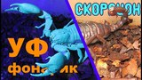 Почему скорпионы светятся в ультрафиолете