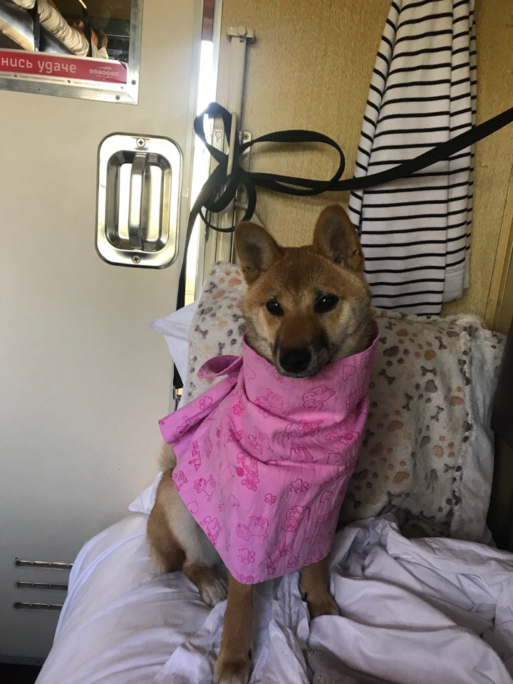 Поездка с собакой в поезде