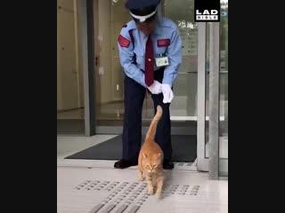 Два кота уже 2 года пытаются попасть музей, но их не пускают
