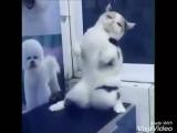 Уматный кот)))