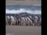 Q_ Why dont you see penguins in Britain_ A_ Because they're afraid of Wales. _penguin_ ( 640 X 640 ).mp4