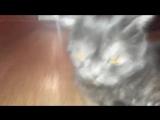 Отзыв от кота о торговле в  закрытой группе. (трейдер Илья Иванов) | Олимп трейд | Olymp trade
