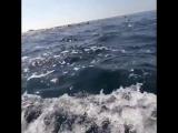 Подводный скутер для дайвинга