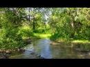 Звуки природы пение птиц Звуки Леса