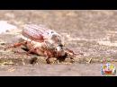 Развивающее видео для детей про насекомых по методике Домана. HD качество.
