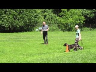 АПС-1 Защита -  (аттестация прикладных собак, АПБТ Ламбада, 1 уровень)