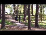 Парк У моря Обского. Обские зарисовки.Новосибирск 2017
