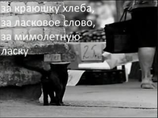 Открытое письмо бездомных животных людям
