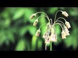 Vargo - Dear Friends - Prelude Sgrima YDedal