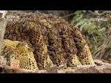 Мёд ''ФэнМи'' (Пчелиное богатство). Дикий Мёд ''Е ФэнМи''. Горный Мёд ''Шань ФэнМи''. Улей-колода ''ФэнСян ЦзяБань''. Уезд Наньч
