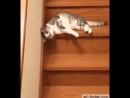 Доказательства того,  что коты жидкое существо