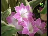 Бодрое утро - вот вам и цветочки
