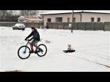 Смешное видео про собак Приколы с животными 2018 Смешные и необычные собаки