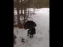 Борзый глухарь (VIDEO ВАРЕНЬЕ)