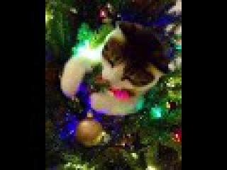 Котик уже радуется наряженной елке, а вы