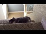 Husky Falls Down the Stairs (Titanic Music)