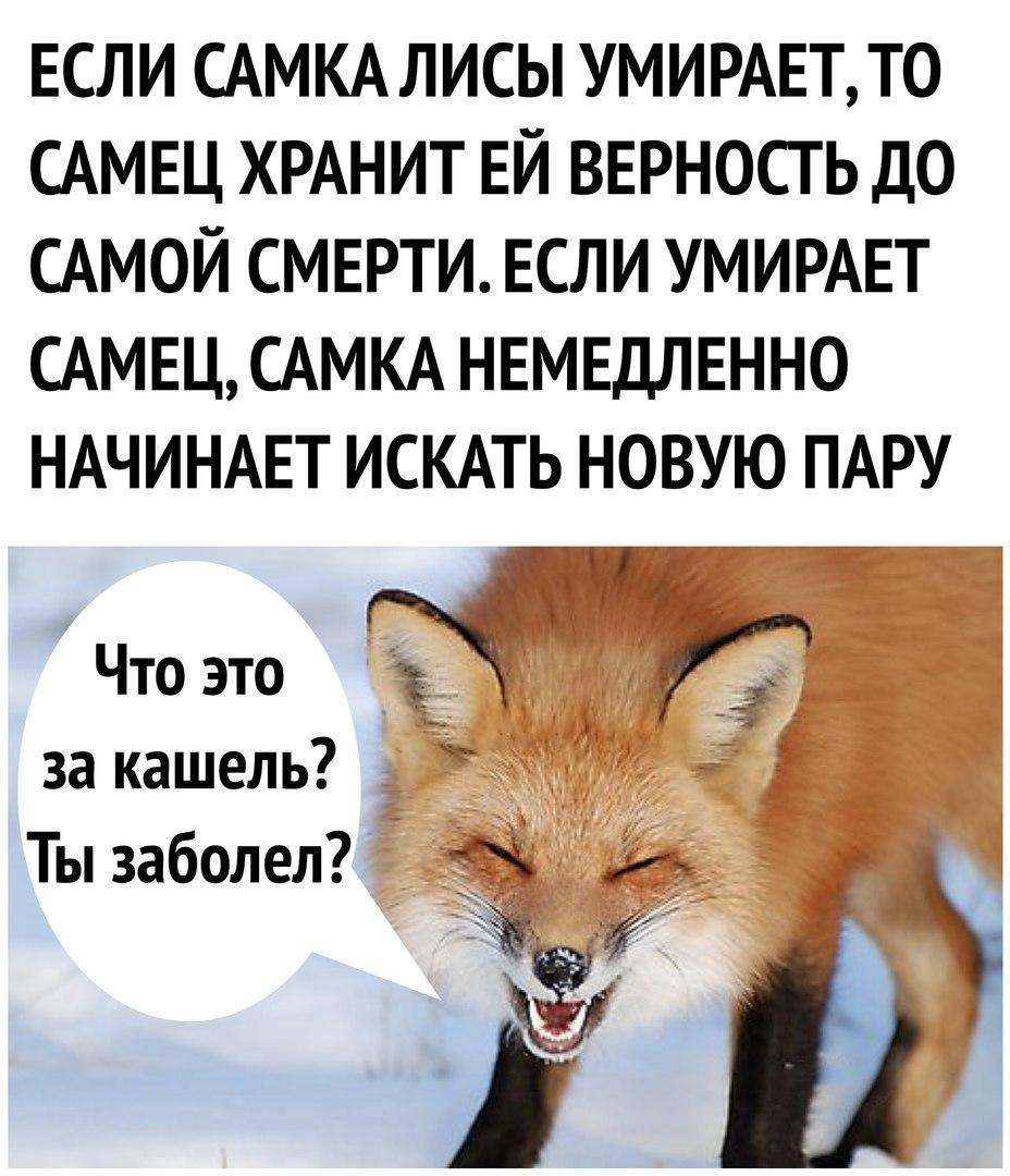 0lSPOCBUvhM - Киса проголодалась