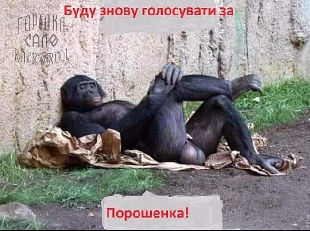 Безсмертний заявив, що балотуватиметься в президенти України - Цензор.НЕТ 732