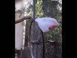 Карусель для попугая