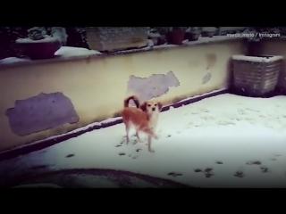 В Риме выпал снег. Закрыты школы, нарушено движение транспорта