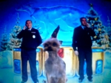ТНТ с годом смешной собаки!