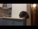 когда курит домовой, а упорот кот