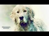 Белль и Себастьян - Тв-ролик (2018)| MSOT
