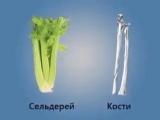 Полезное сходство: продукты и органы человека