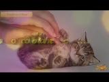 Самые забавные кошки Что любит кошка Погладь кота Amazing cats Pet the c