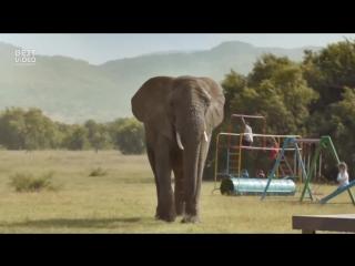 Родителей заменили дикими животными в ролике от McCann