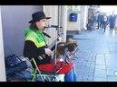 Собачка с гитарой  Питер  Невский проспект  Уличные музыканты