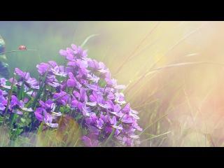 Peaceful Music, Relaxing Music, Instrumental Music Sweet Summer Rose by Tim Janis