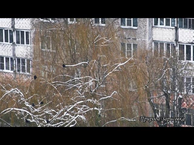 🌠 А ЗА ОКНОМ ЗИМА ~ Идет Снег и ПАДАЮТ СНЕЖИНКИ Красивое видео и ЗИМНИЙ ПЕЙЗАЖ 🌠