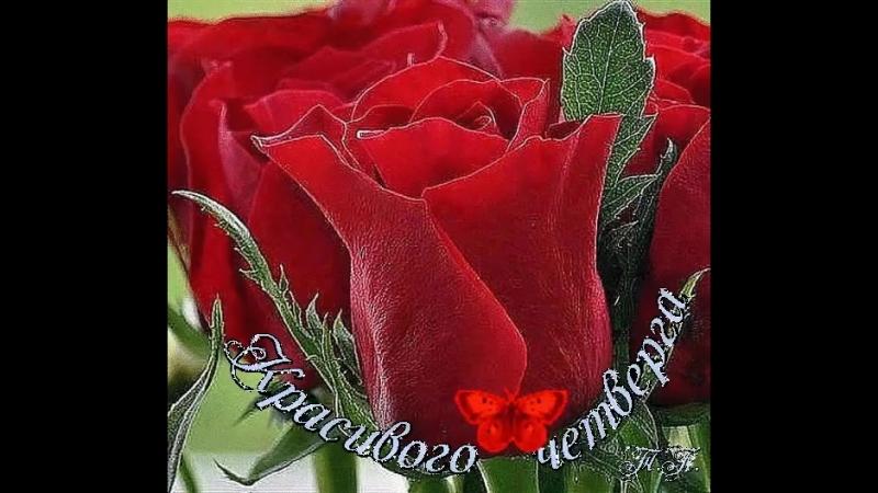 Doc327607104_460133497.mp4