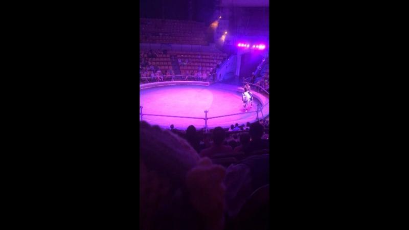 Видео от Рады Владовой
