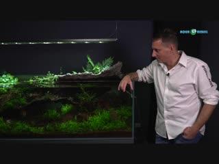 Aquarienpflanzen richtig zurckschneiden Awesome Tips and Tricks mit Oliver Knott