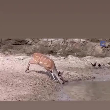 @gyzykly videolar on Instagram Krokodildan Prank 🤣🤣🤣 *sesini açyp görüñ @gyzykly videolar gyzykly tasin video soz degishme oglan gyz dur