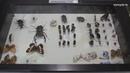 Удивительный мир энтомологии: более 700 видов насекомых собрали в усадьбе Костино