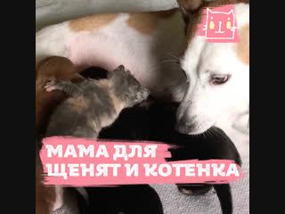 Собака приняла кошку как свою дочь