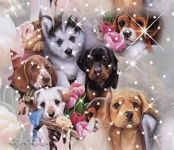 Поздравление марта, открытки с днем рождения кошки и собаки